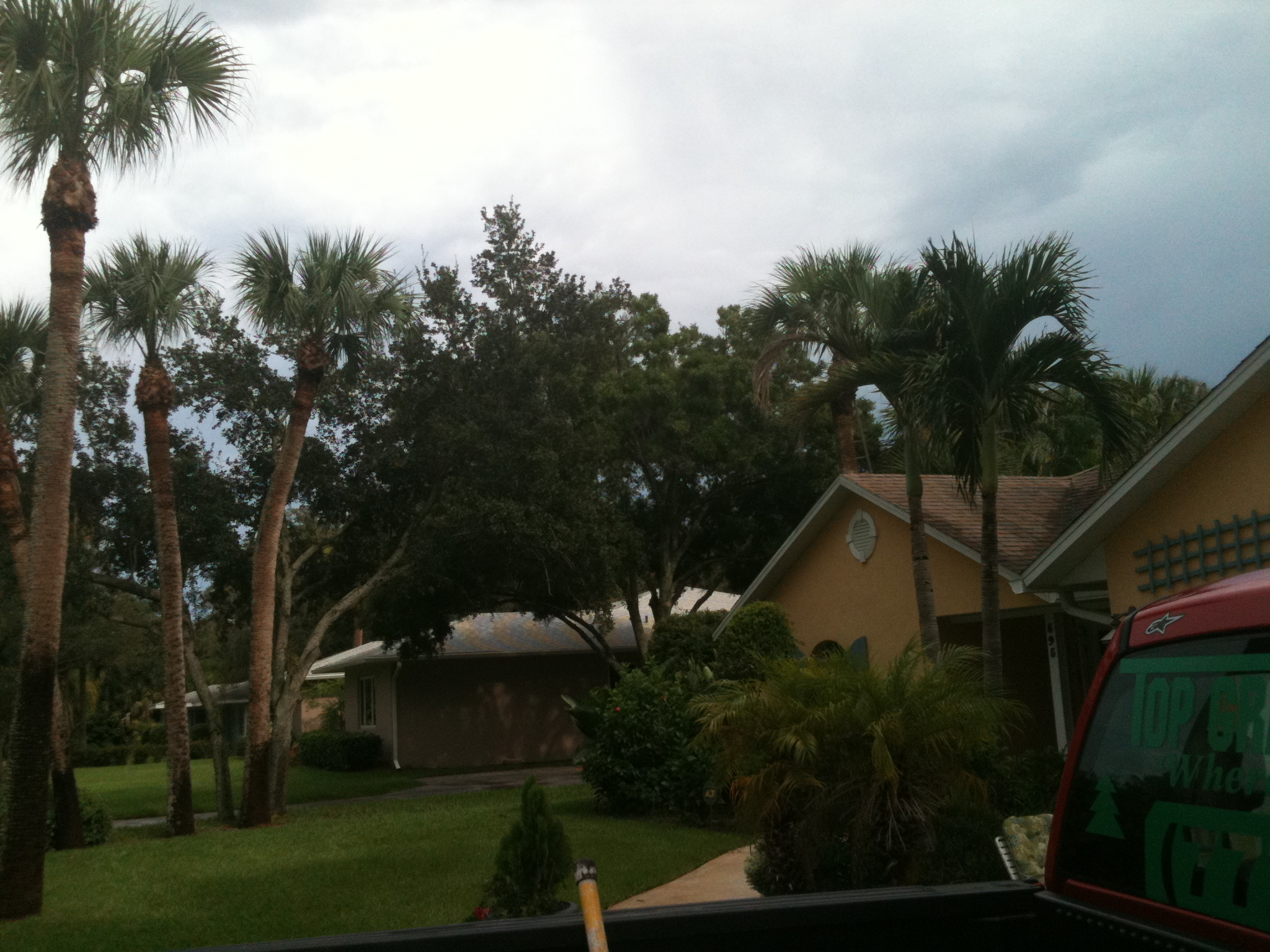 Tall Palm Tree Trimming