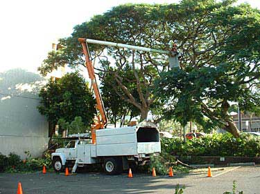 Lakeland Tree Removal