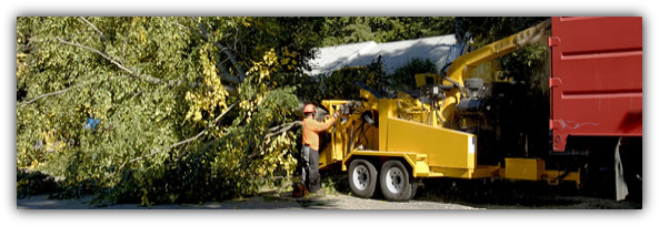 Sebastian Debirs Clean-Up Service (772) 202-2266 | Tree Care | Stump
